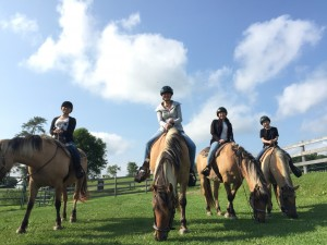 Group horseback trail rides